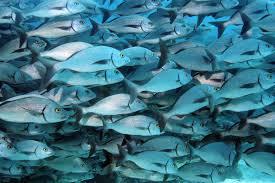 fish andeantrailscouk