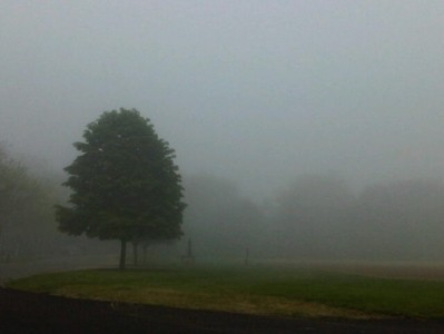 watch-what-happens-live-andys-blog-foggy-tree