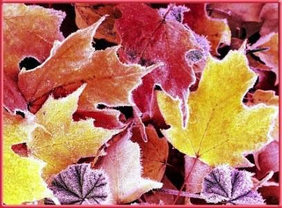 Autumn_Frost