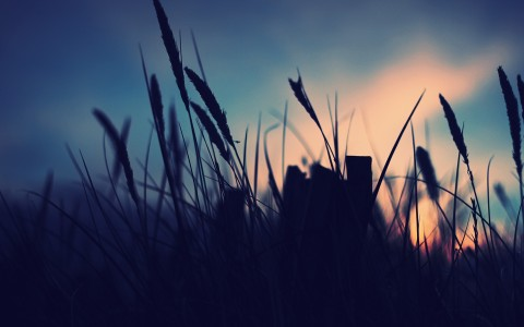 November Field Blue Sunset Free Wallpaper HD