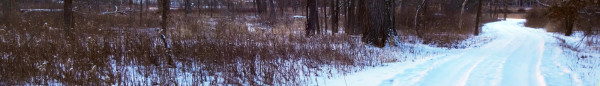arboretum road LENT I